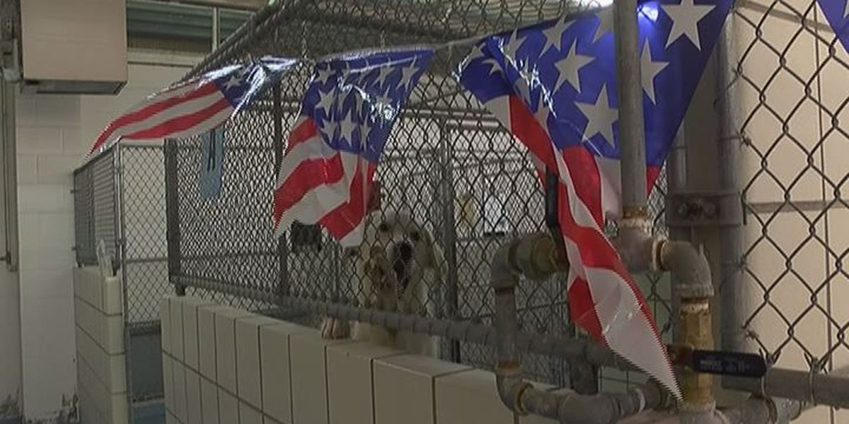 Veterinarian and Lufkin Animal Control say protect your pet from fireworks fear
