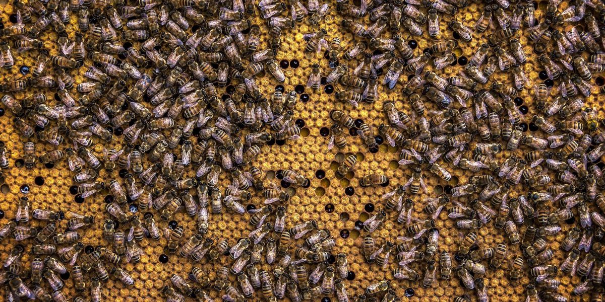 East Texas Ag News: What causes bee swarms in the early spring?
