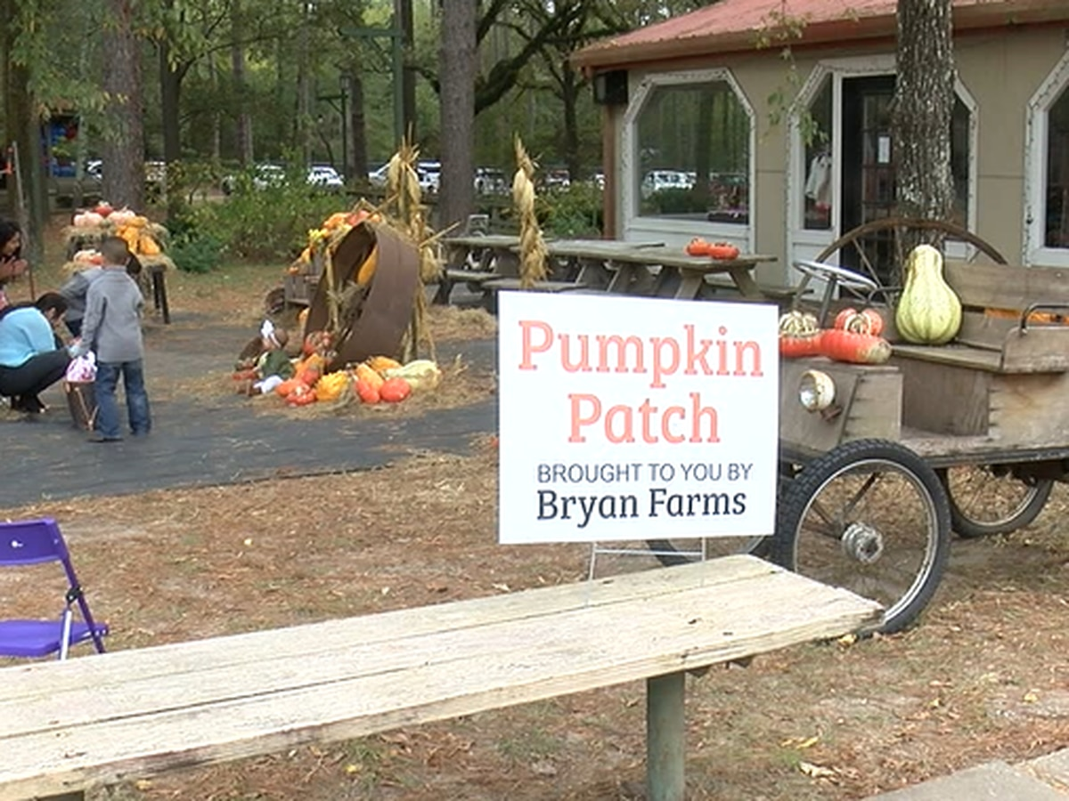 Preparations in place for Halloween drive-thru at Lufkin pumpkin patch