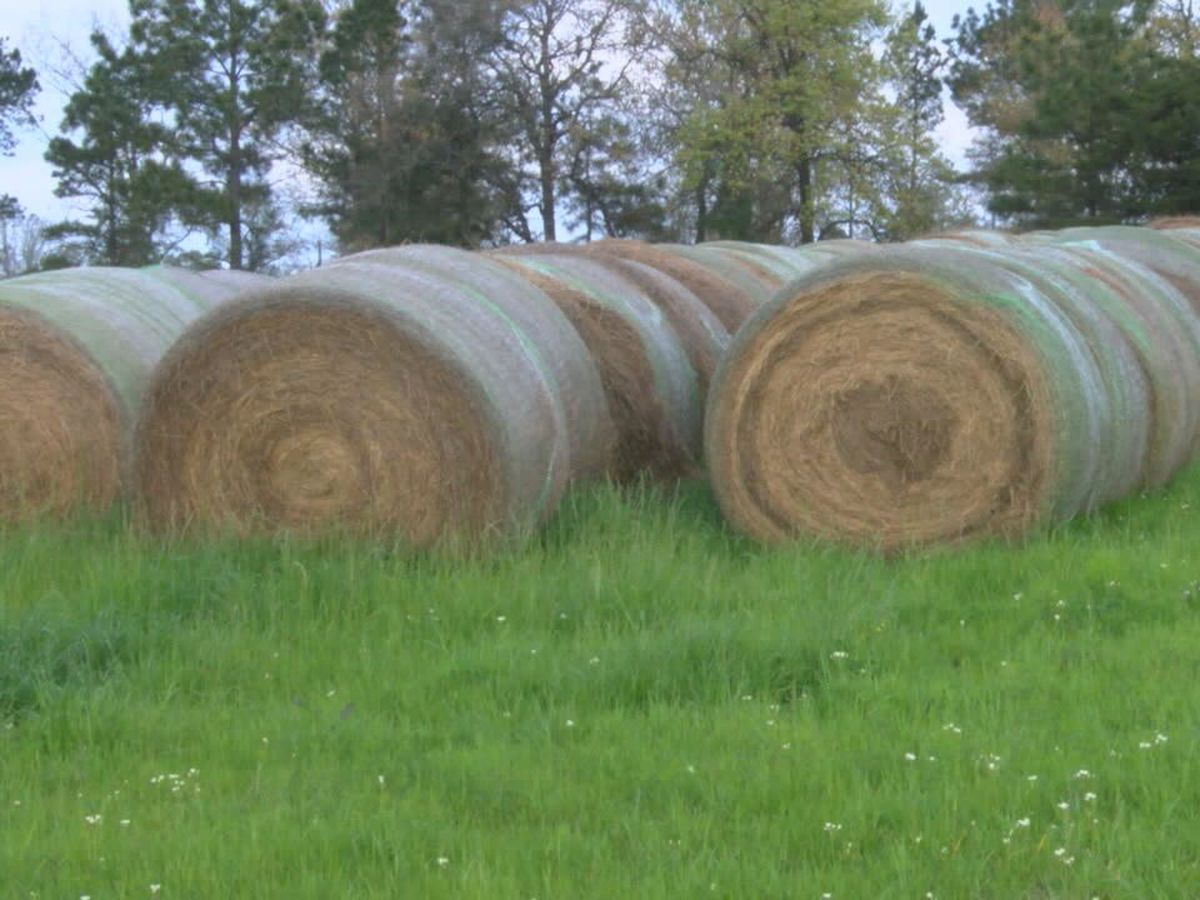 East Texans face shortage of hay supply