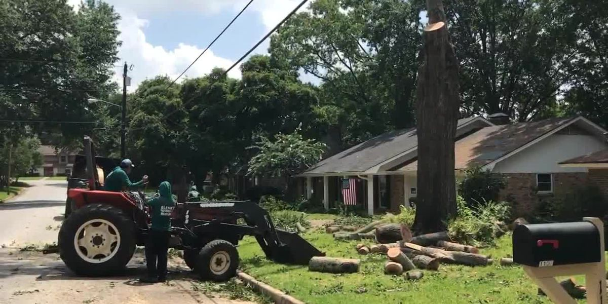 Proper tree maintenance could reduce property damage during storms