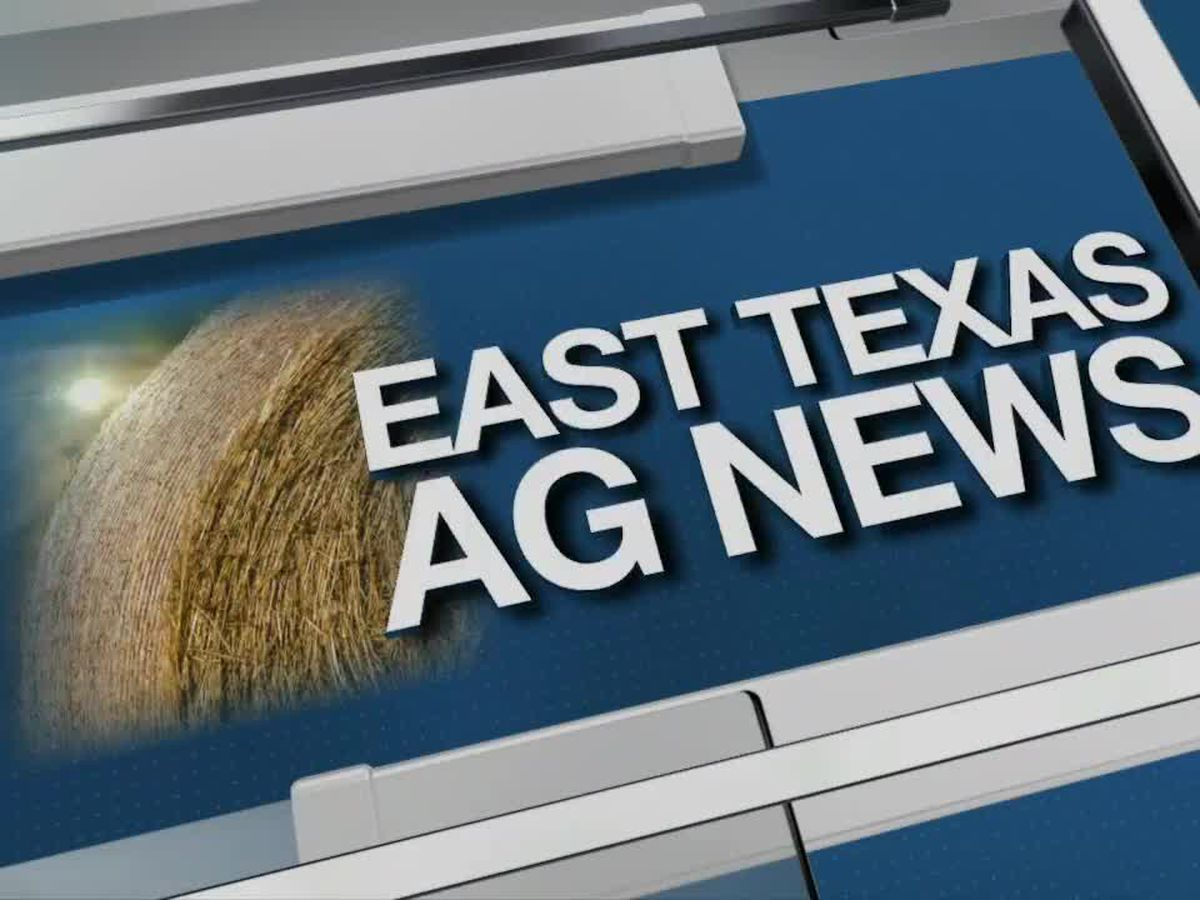 East Texas Ag News: All cattle prices higher this week