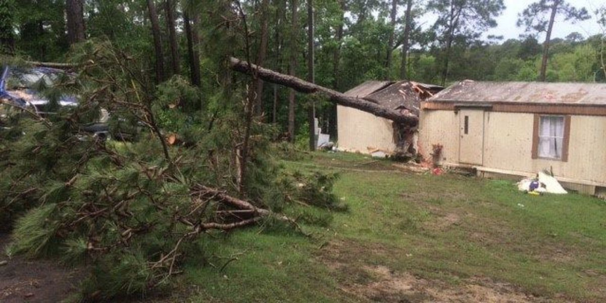 Man injured when tree falls on Jasper Co. mobile home