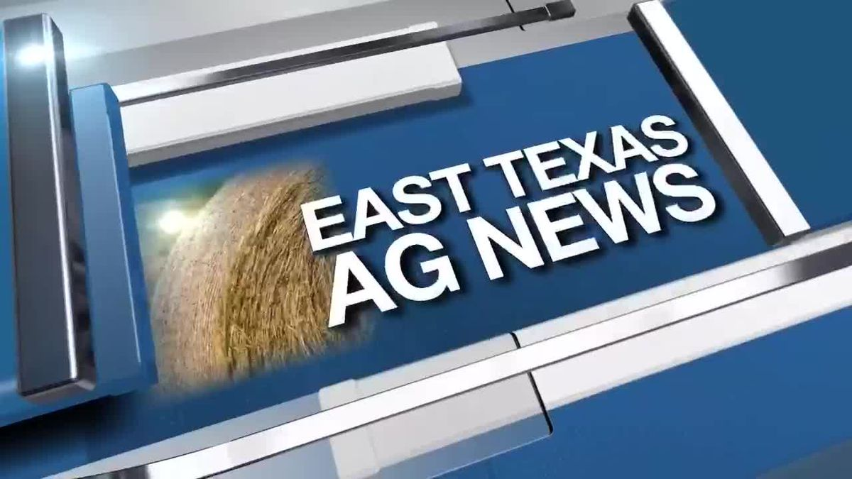 East Texas Ag News: The benefits of mulching during hot, dry months