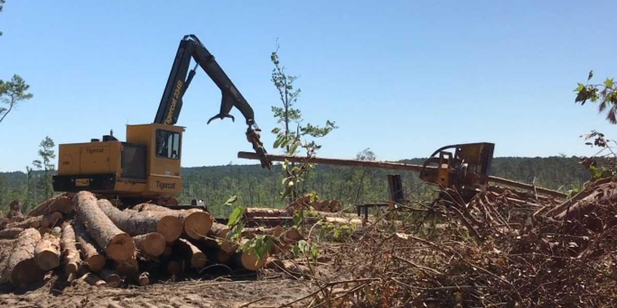 Salvage operation underway at Davy Crockett National Forest; local mills to benefit from tornado damage