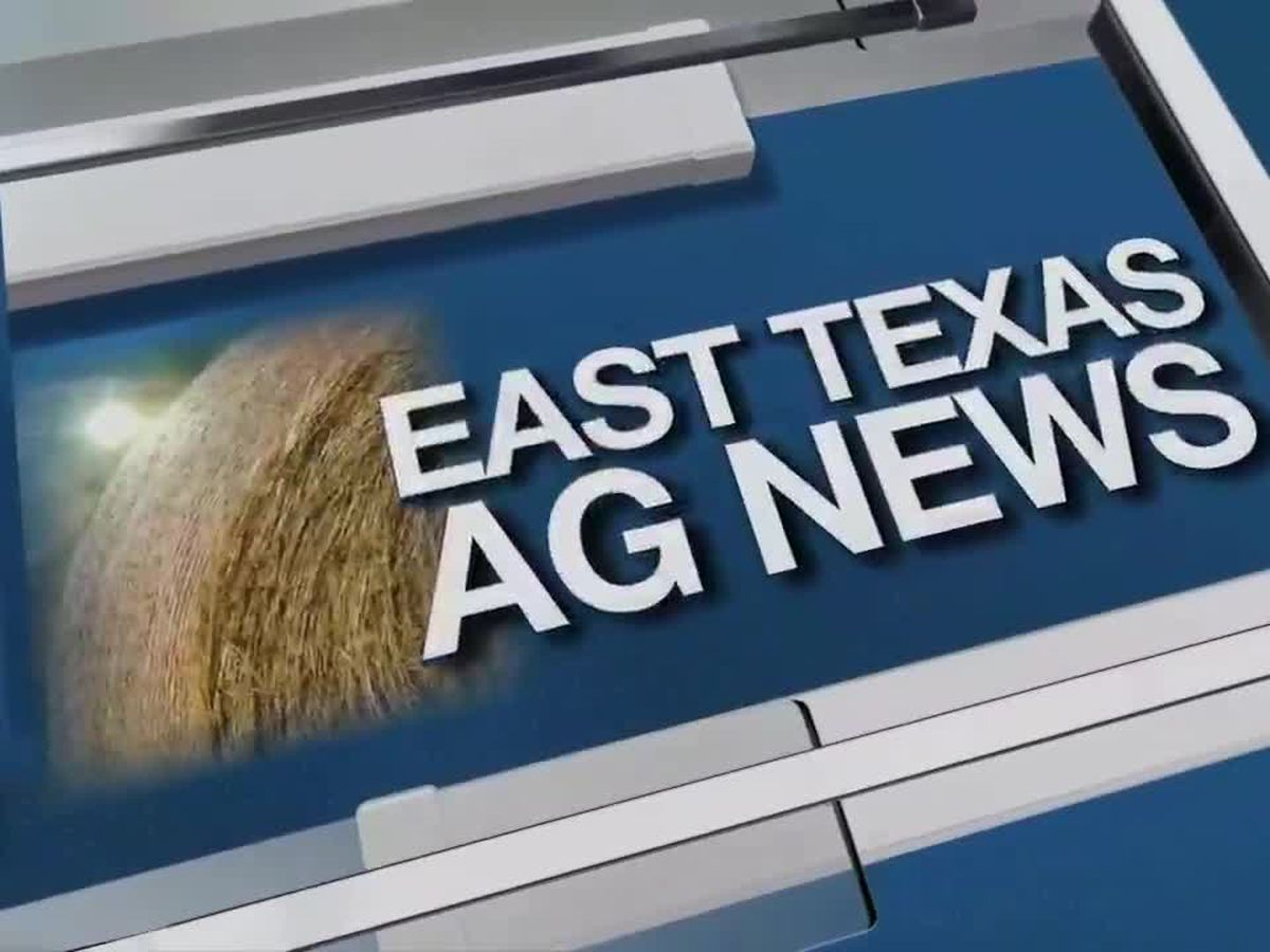 East Texas Ag News: Cattle prices mixed this week
