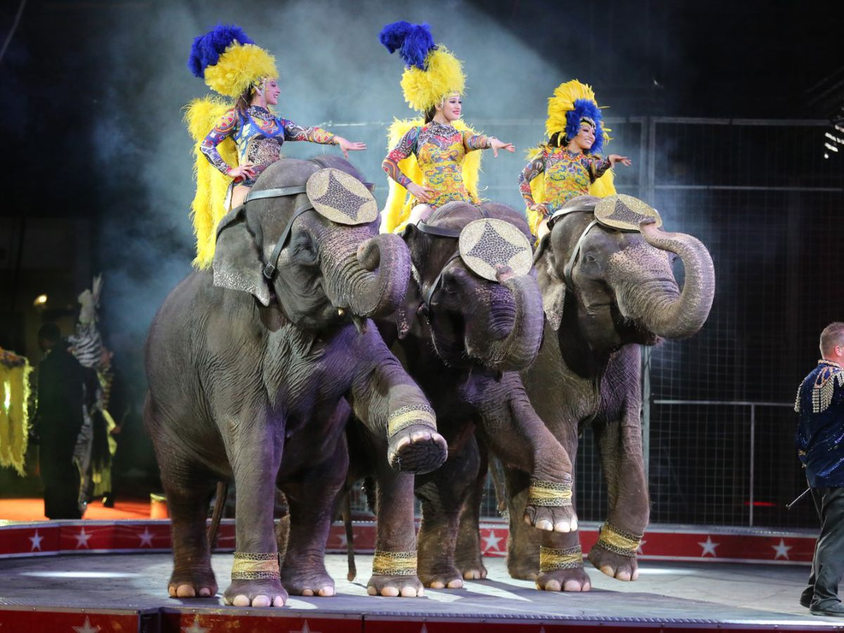 Circus performers get back on stage in over a year