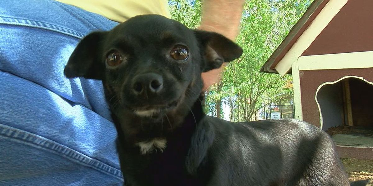 Small Bitsy has a big heart and a need for a new home
