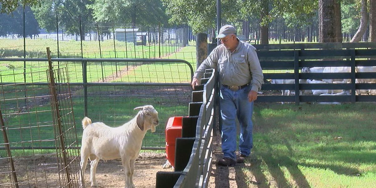 East Texas man talks the worth of meat goats