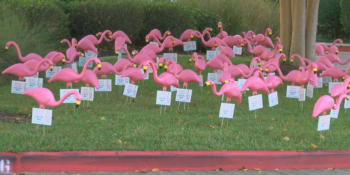 CHI Saint Luke's hosts Breast Cancer is for the Birds event
