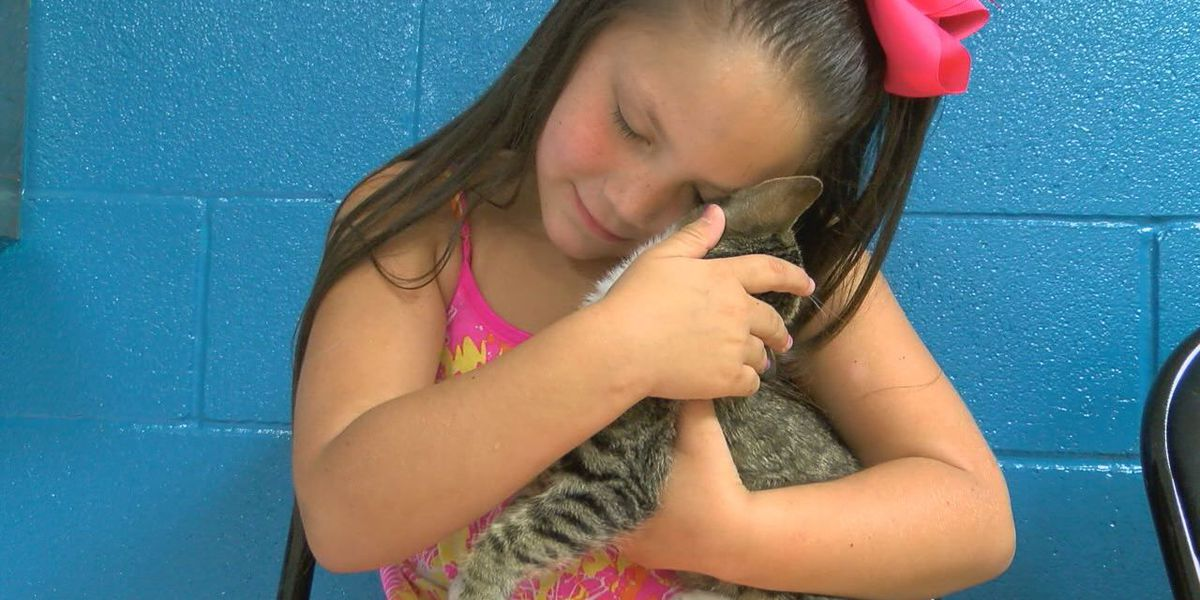 Donate to animal shelter for Haley's 6th birthday