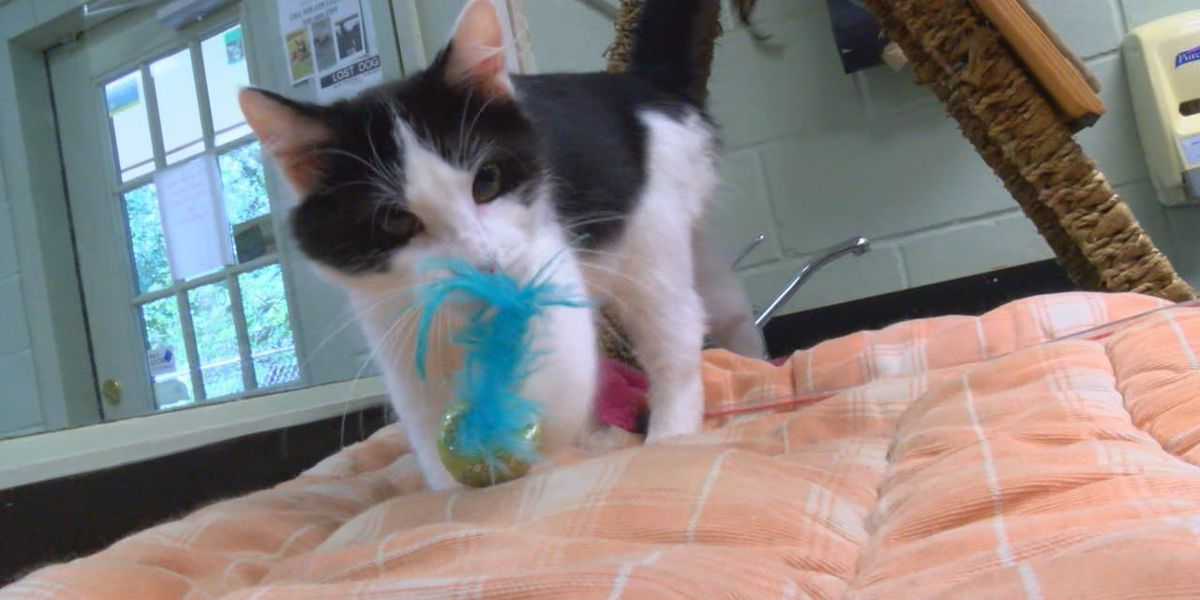 Curious Sylvester looking for forever home