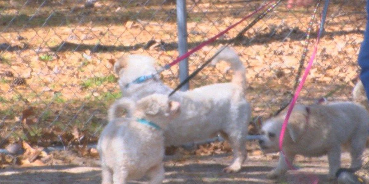 Three pups survive house fire, looking for home