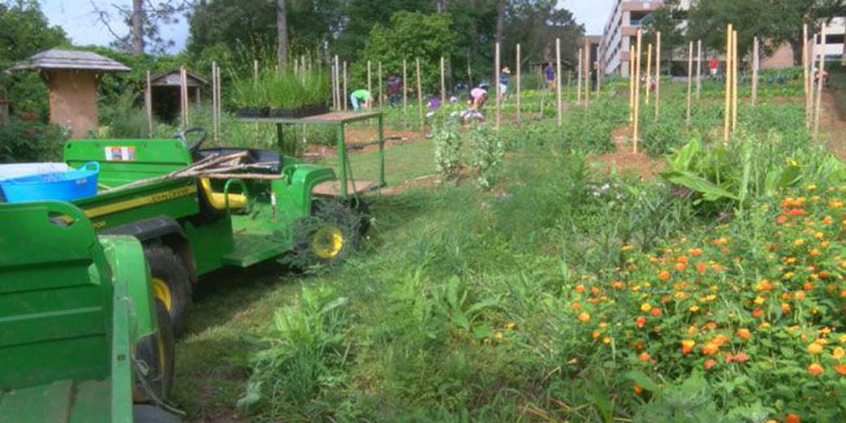 SFA horticulture students learning about sustainable plantings via prairie gardens