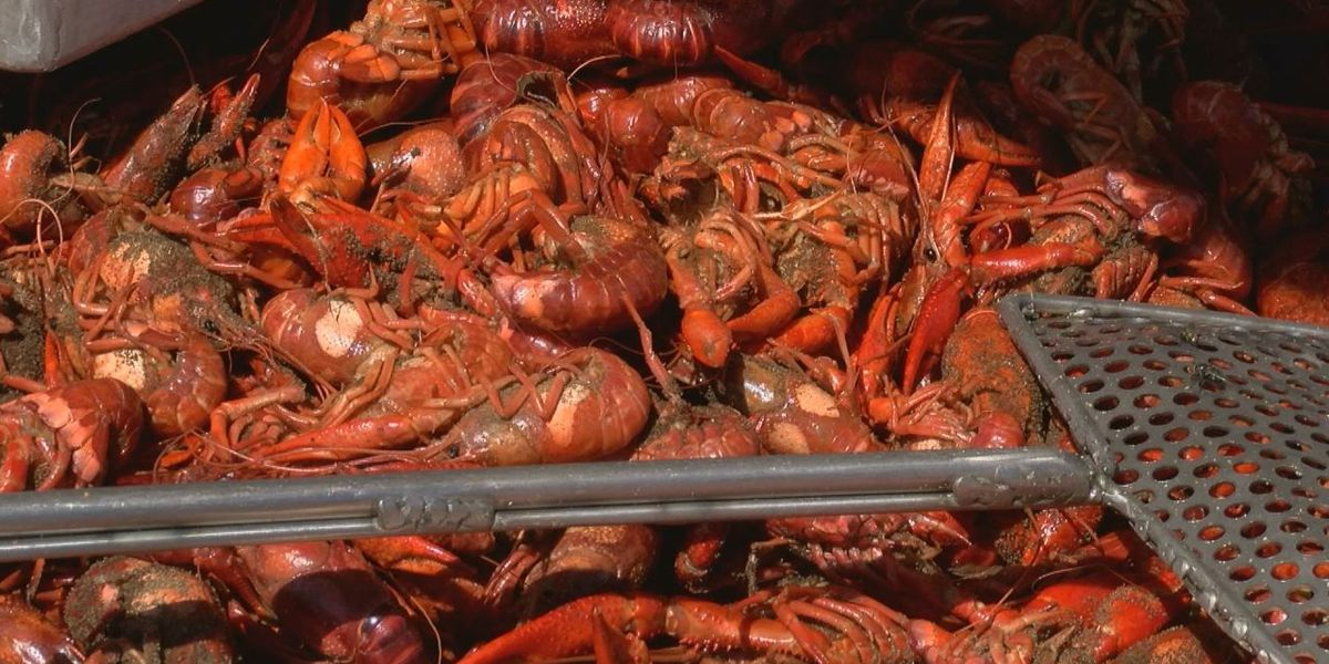 Lufkin experts say chilly temperatures will cause slow, low start to Crawfish season