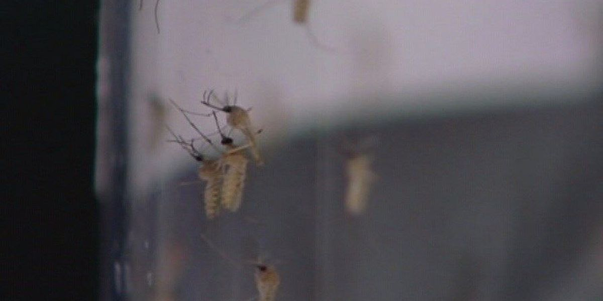 East Texas residents fight the bite as mosquito population increases