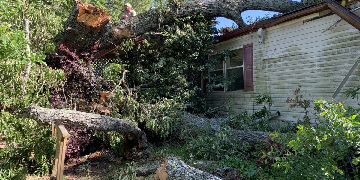 Family member hospitalized after tree collapses on home