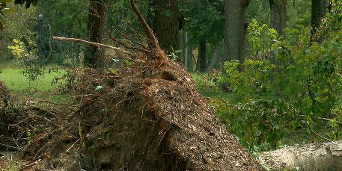 Weakened trees cause issues in Deep East Texas after tropical disturbances