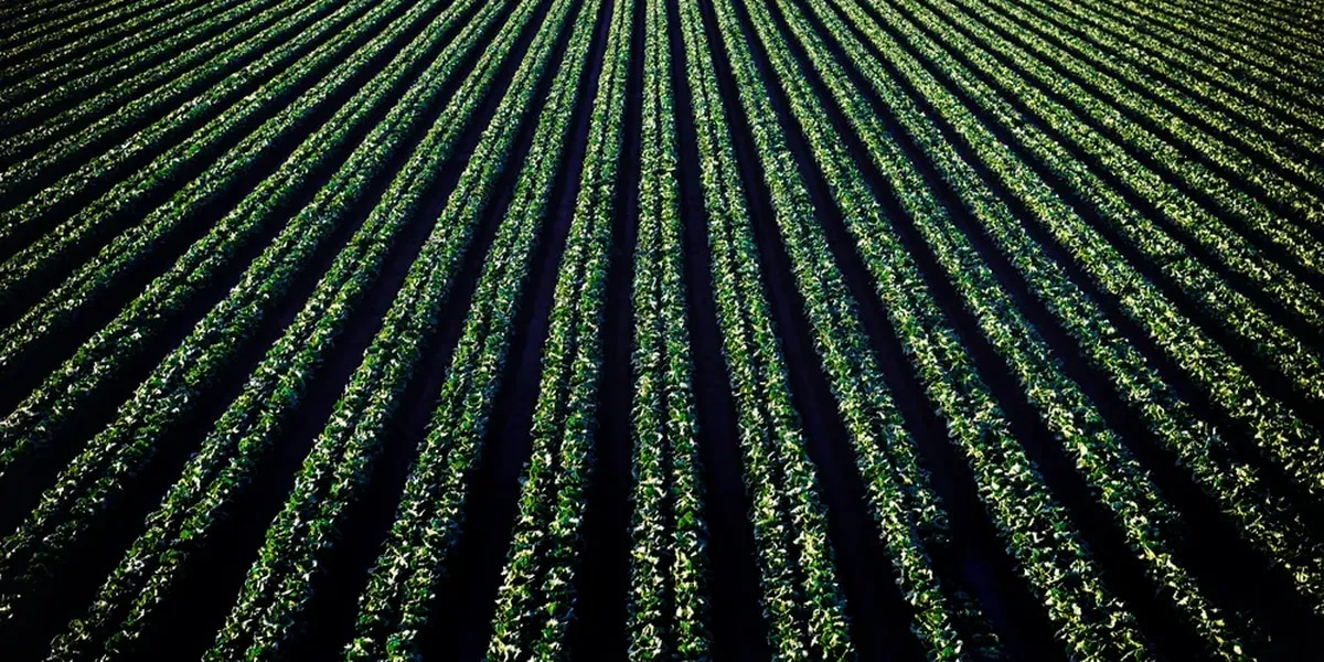 East Texas Ag News: Cover crops for home gardens and fields