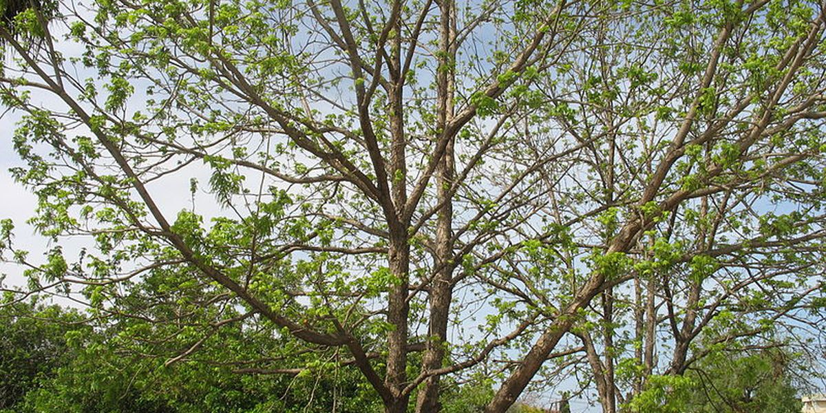 East Texas Ag News: When to prune your plants