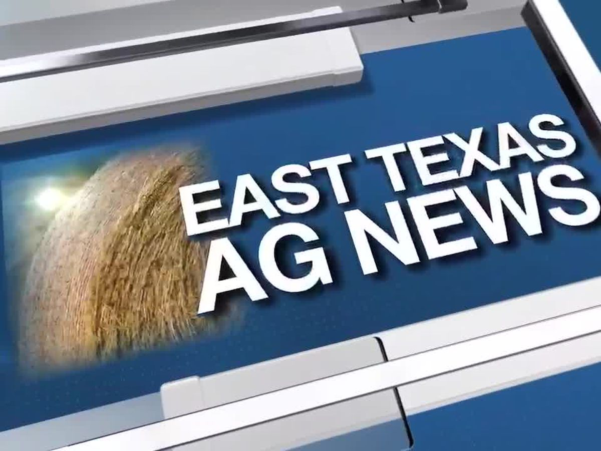 East Texas Ag News: 2020 growing season behind on rainfall