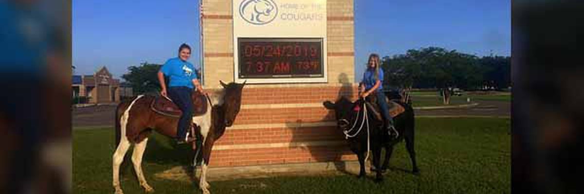 COWGIRL: Texas student rides cow to high school on last day of class