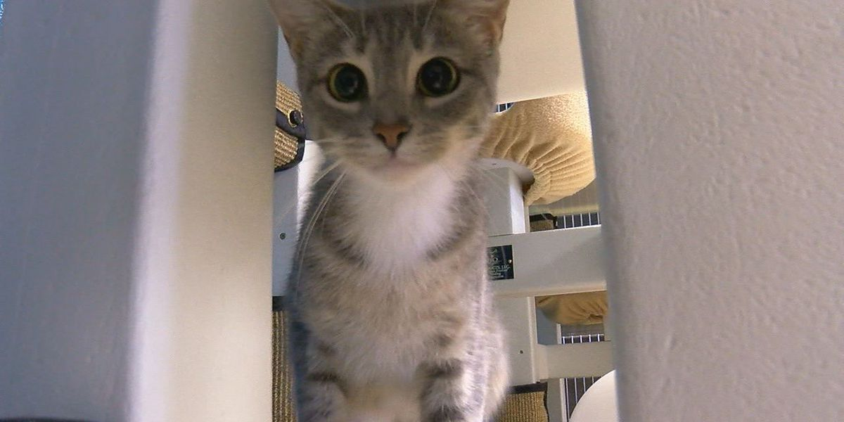 Samara promises to be the perfect family pet
