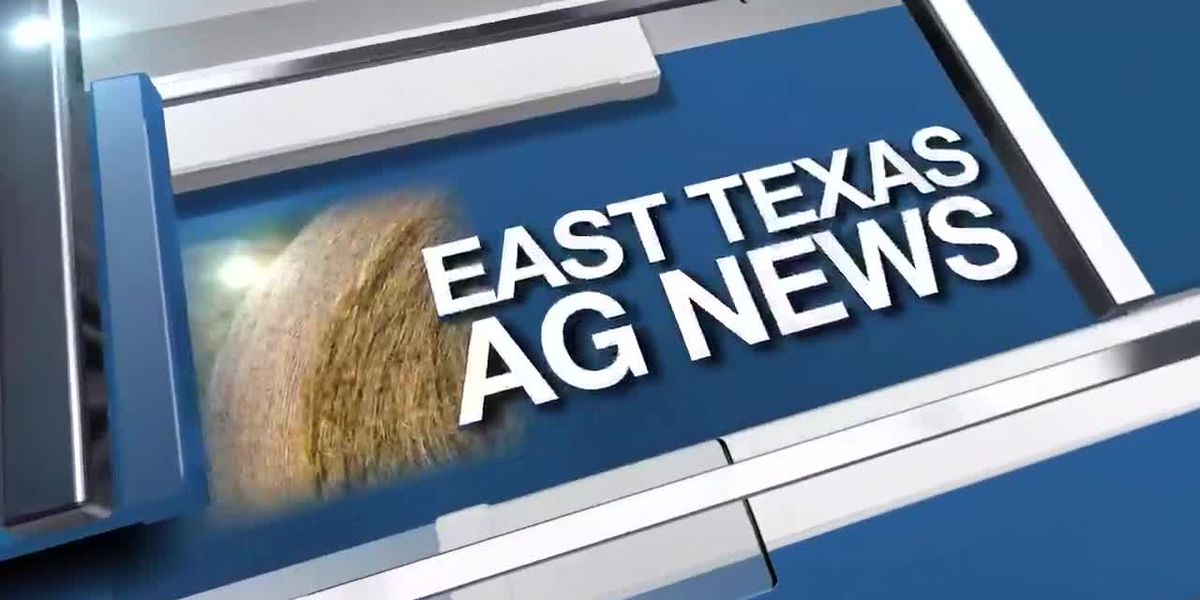 East Texas Ag New: Testing the quality of your hay