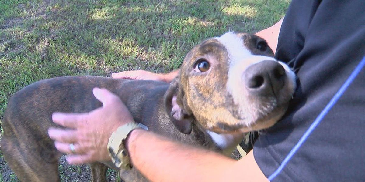 BFF: active catahoula cur mix looking for a permanent home