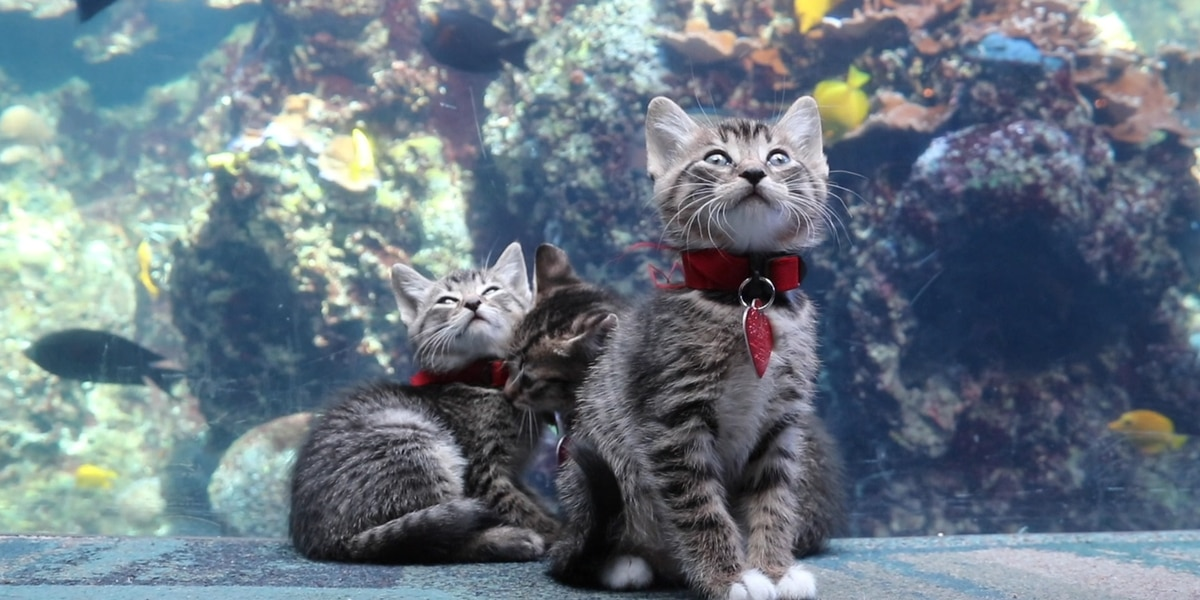 Atlanta Humane Society took a group of kittens to the Georgia Aquarium in Atlanta for a field trip