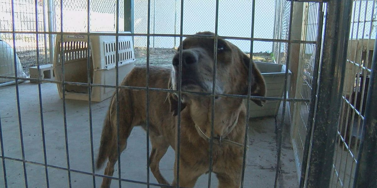 Close to 80 animals rescued from Alto, Trinity and brought to Humane Society of Angelina County