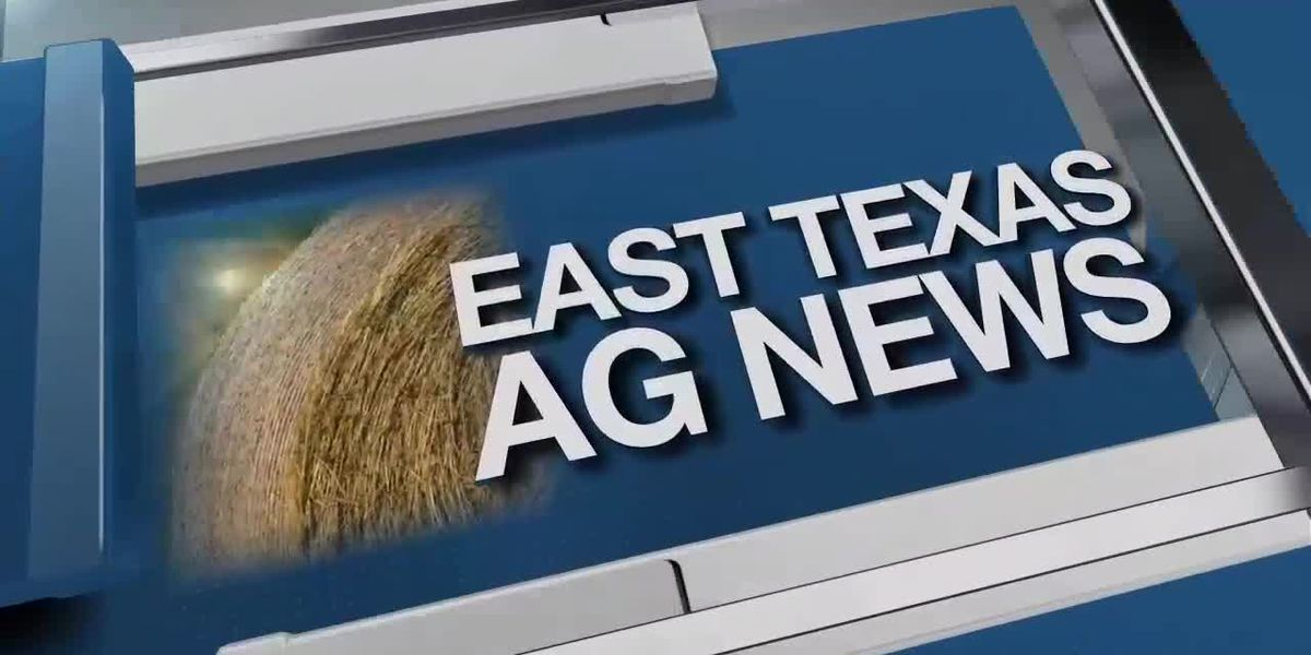 East Texas Ag News: Sorghum acres expected to be up this year