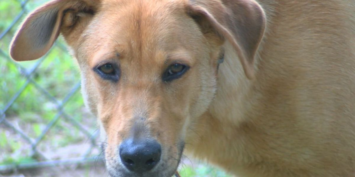 Rocky, a 10-month-old Lab-mix needs some TLC from a loving forever family