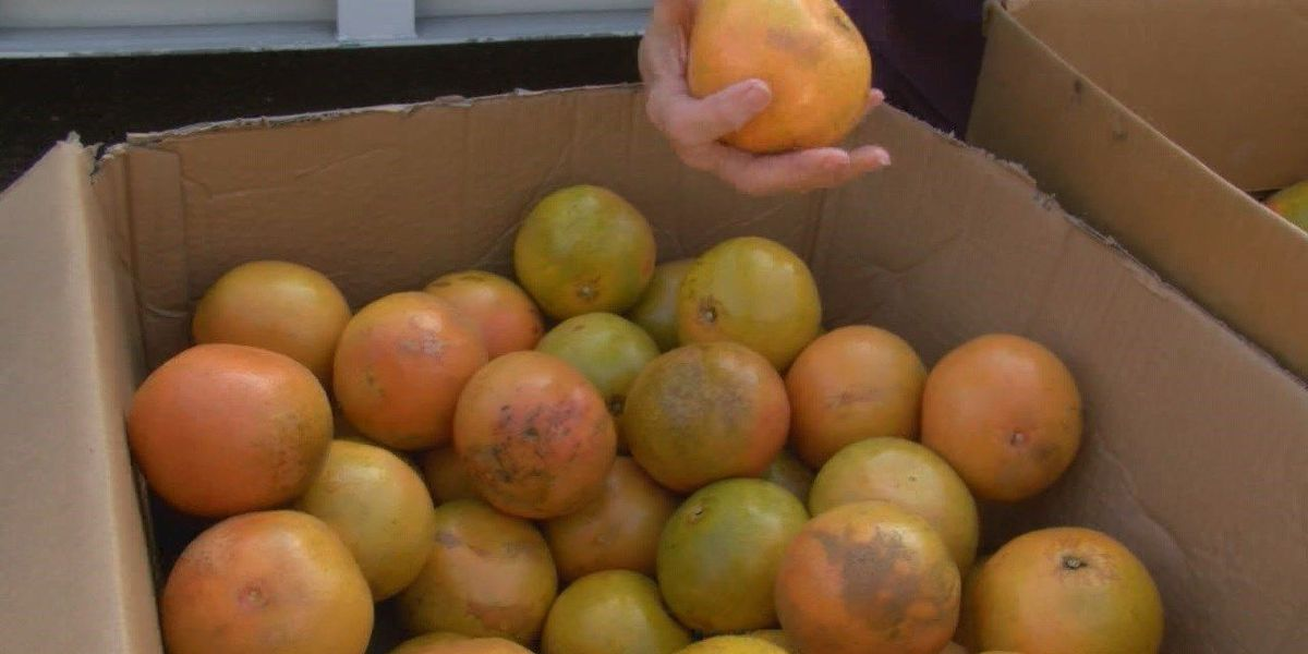 Houston Food Bank donates food, offers benefits to rural East Texas areas