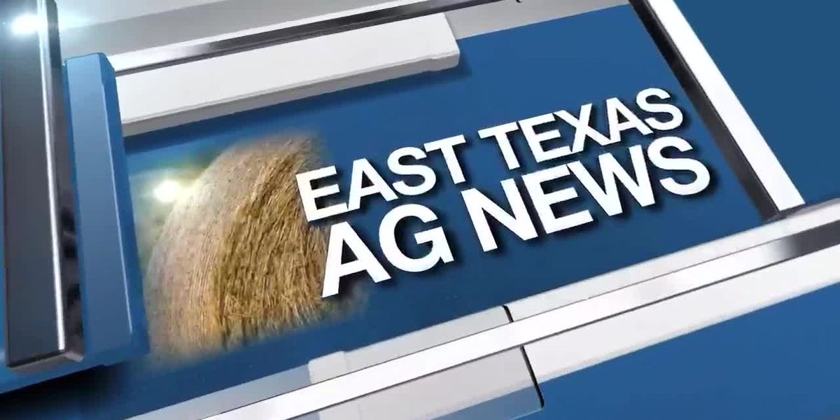 East Texas Ag News: Benefits of using mulch in landscaping