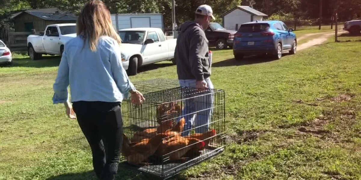 Customers flock to poultry farm in Angelina County during COVID-19 shortages