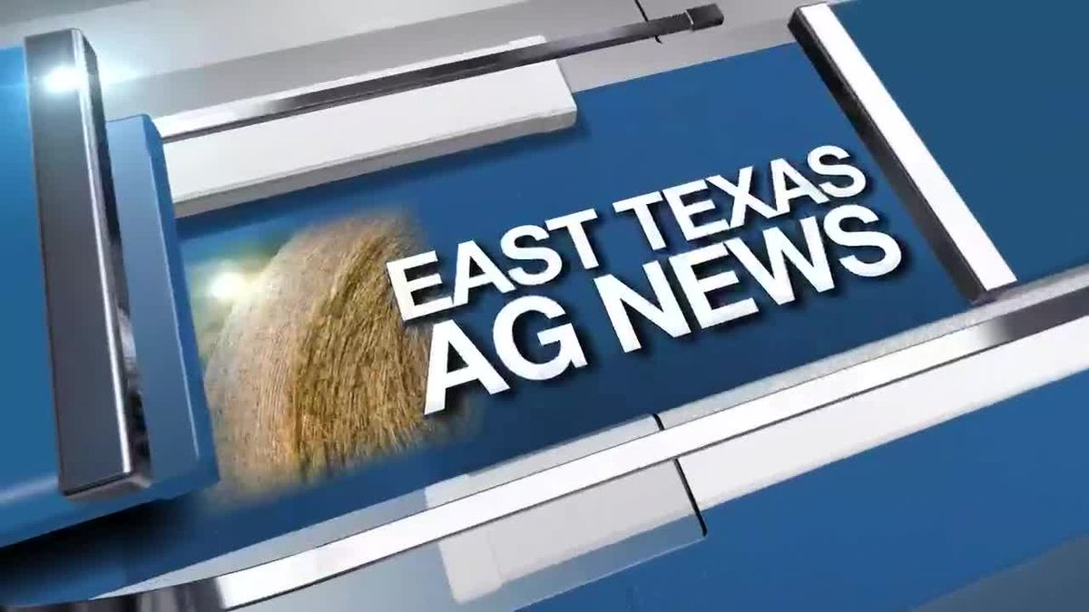 East Texas Ag News: High temps expected to help with horse fly problems