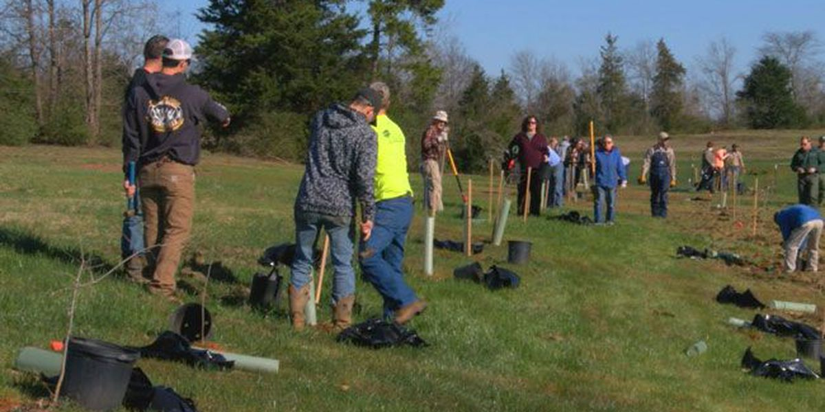 Volunteers show up force to plant 150 trees at Nacogdoches Tricentennial