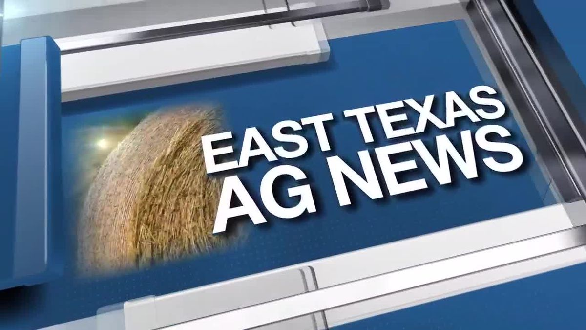 East Texas Ag News: Growing onions in your spring garden