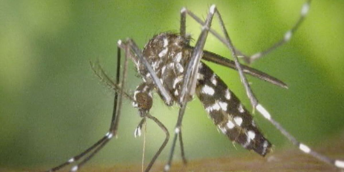 2 new West Nile cases reported in Angelina County