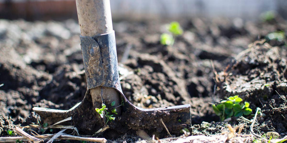 East Texas Ag News: Cold frames can extend gardener's growing season