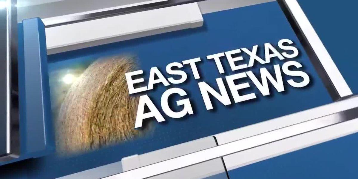 East Texas Ag News: Tips on planning a vegetable garden