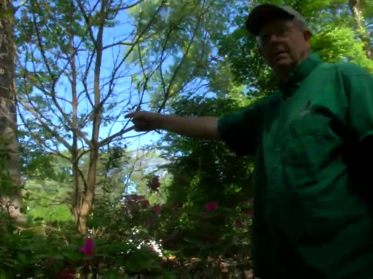 WebXtra: Portions of SFA Gardens open to visitors