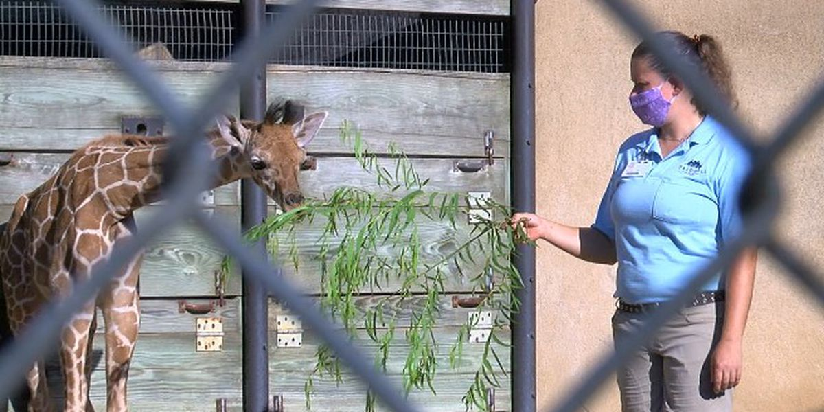 How zoos are keeping their guest, their staff, and their animals safe
