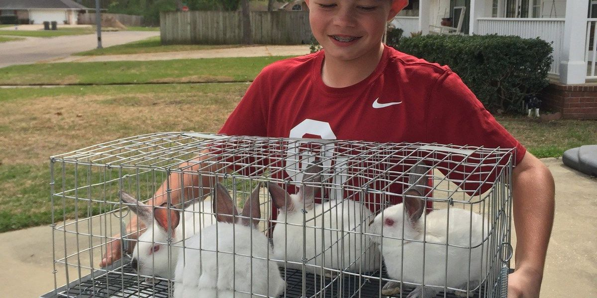 Angelina County students prepare for county fair