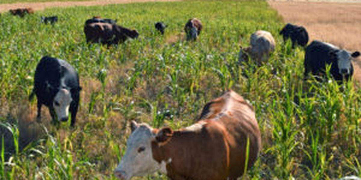 East Texas Ag News: This week's hay news