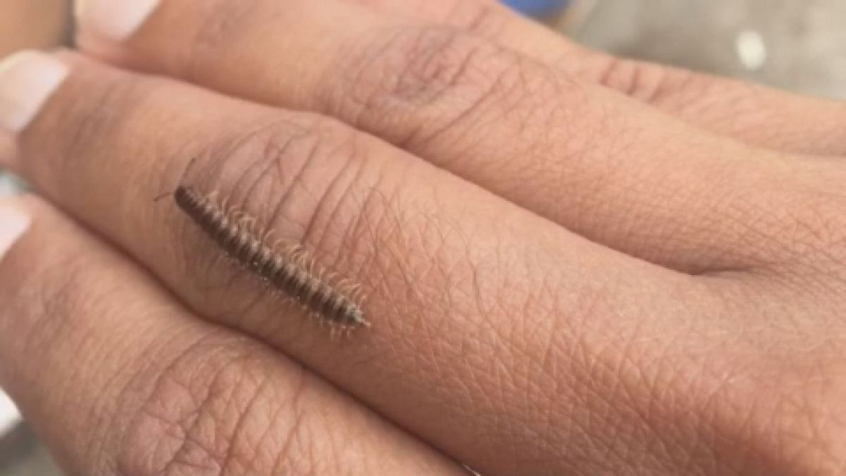East Texans dealing with more centipedes, millipedes