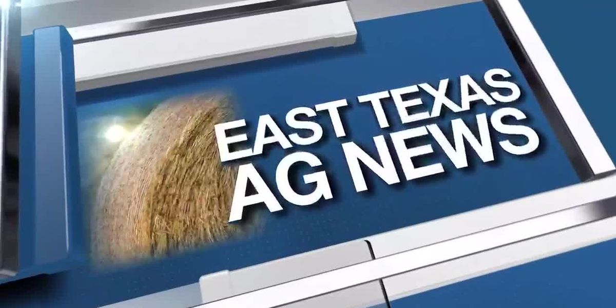East Texas Ag News: This week's hay trades remain steady