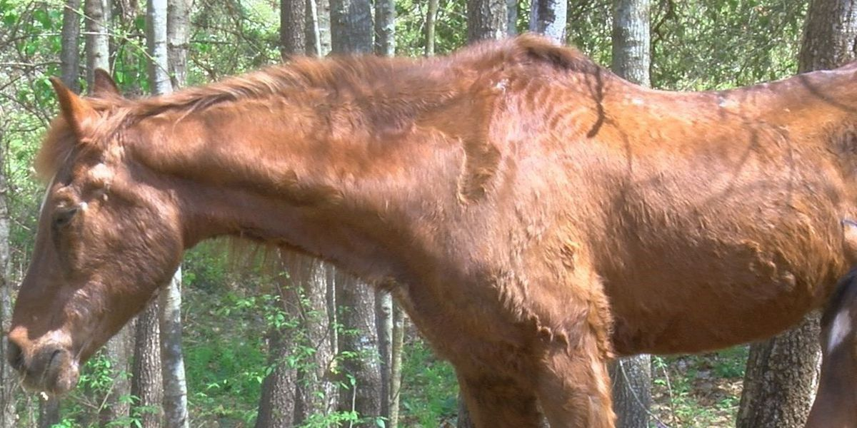 Nacogdoches horse turns 39 this week