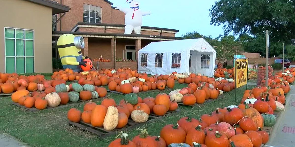 Rain impacting local East Texas pumpkin patches